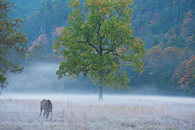 Poster featuring the photograph Cataloochee Morning #1 by Rick Hartigan