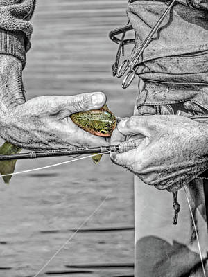 Catch And Release Rainbow Trout Monochrome Select Color Poster by Jennie Marie Schell