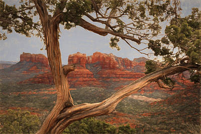 Cathedral Rock View Poster by Donna Kennedy