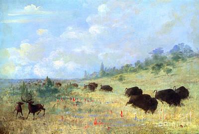 Catlin: Elk & Buffalo Poster by Granger