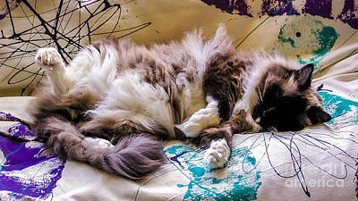 Catnap Poster by Nancy L Marshall