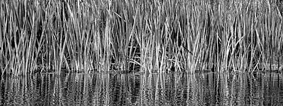 Poster featuring the photograph Cattail Reflection  by Britt Runyon