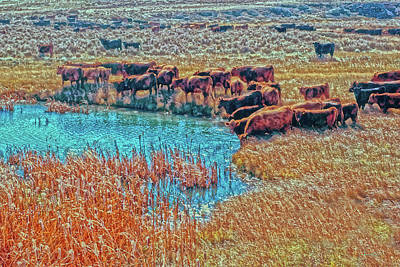 Cattails, Cattle And Sage Poster by Amanda Smith