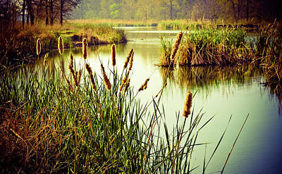 Cattails In Lake Murray Poster