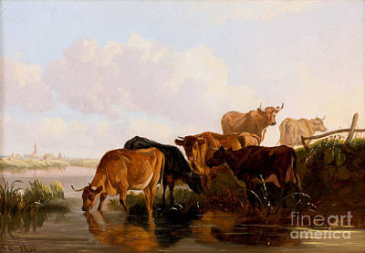 Cattle Watering In Canterbury Meadow Poster