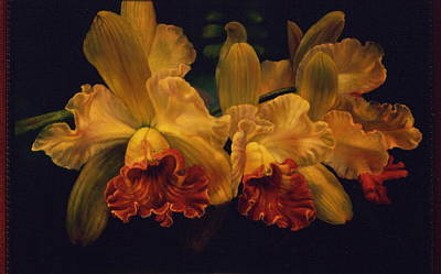 Cattleya Orchid Poster by Carolyn Sterling