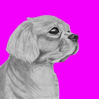 Cavalier King Charles Spaniel With Pink Background Poster