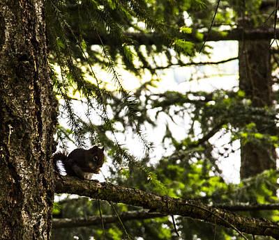 Cda Squirrel Poster by Angus Hooper Iii