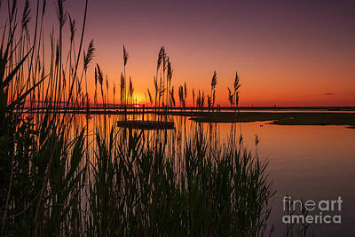 Cedar Beach Sunset In The Reeds Poster