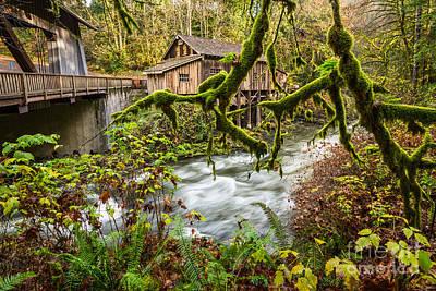 Cedar Creek Mill Mosses Poster by Jamie Pham
