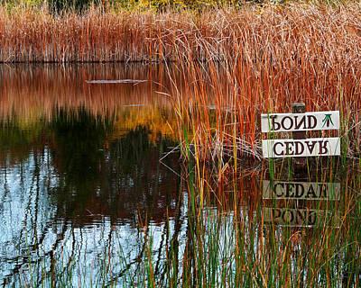 Cedar Pond Poster