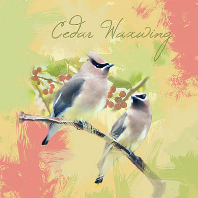 Poster featuring the photograph Cedar Waxwing Watercolor Photo by Heidi Hermes