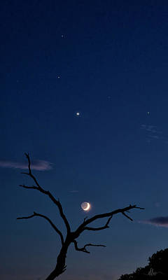 Celestial Alignment Poster by Dianna Lynn Walker