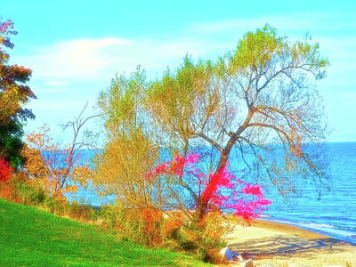 Celestial Skies Beach Tree Poster by Aimee L Maher Photography and Art Visit ALMGallerydotcom