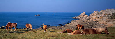 Celtic Horses On The Shore, Finistere Poster by Panoramic Images