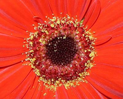 Center Seeds Poster