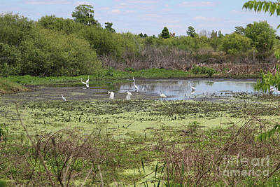 Central Florida Landscape With Egrets Poster by Carol Groenen