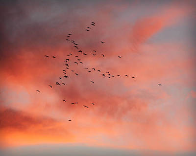 Chalco Hills Sunset -geese Poster by Kathy M Krause