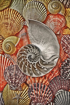 Chambered Nautilus Shell Abstract Poster
