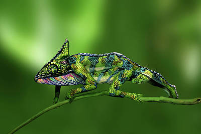 Chameleon Bodypainting Illusion Poster