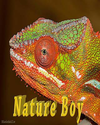 Chameleon Nature Boy Poster by LeeAnn McLaneGoetz McLaneGoetzStudioLLCcom