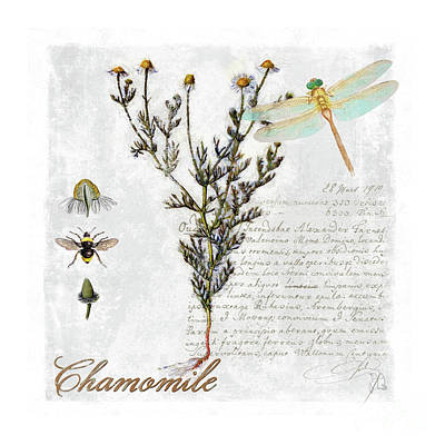 Chamomile Herb Dragonfly Botanical Illustration Art Poster by Tina Lavoie