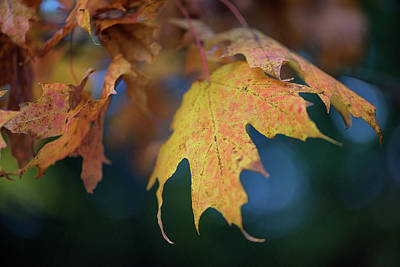 Changing Leaves Poster by Rick Berk