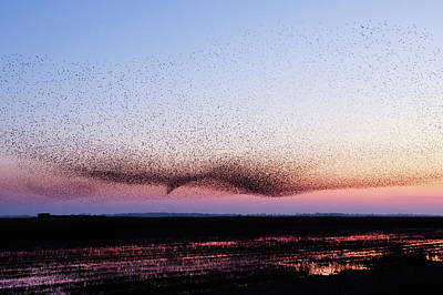 Chaos In Motion - Bird Of Many Birds Poster by Roeselien Raimond