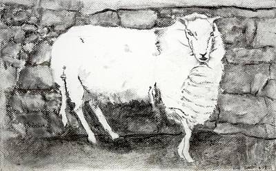 Charcoal Sheep Poster