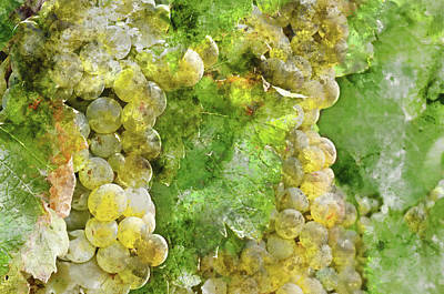 Chardonnay Grapes Close Up Poster