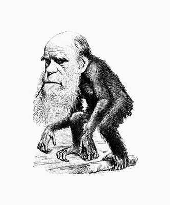 Charles Darwin As An Ape Cartoon Poster by War Is Hell Store