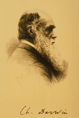 Charles Robert Darwin Poster by .
