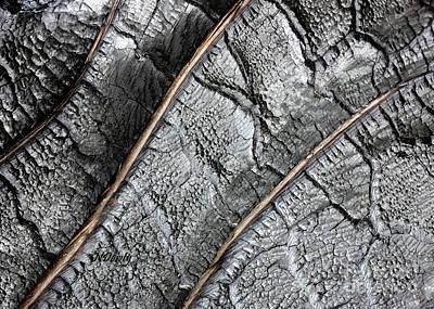 Charred Pine Bark Poster