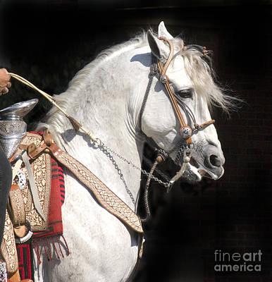 Charro Stallion Poster