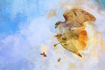 Chasing Leaves Red Tailed Hawk Art Poster