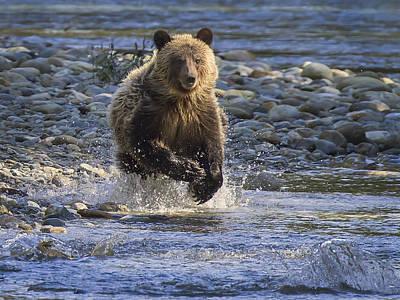 Chasing Salmon Poster