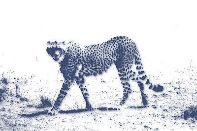 Cheetah 2 Poster by Joe Hamilton