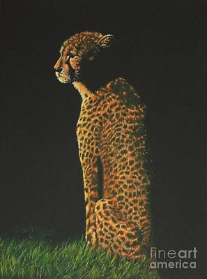 Cheetah At Sunset Poster