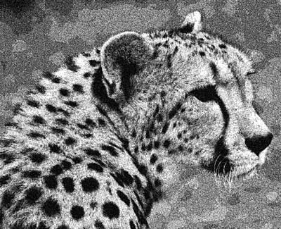 Cheetah Drawing Poster