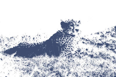 Cheetah Poster by Joe Hamilton
