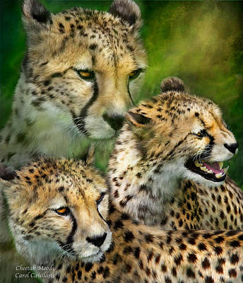 Cheetah Moods Poster by Carol Cavalaris