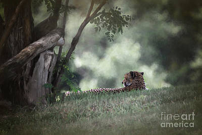Cheetah On Watch Poster