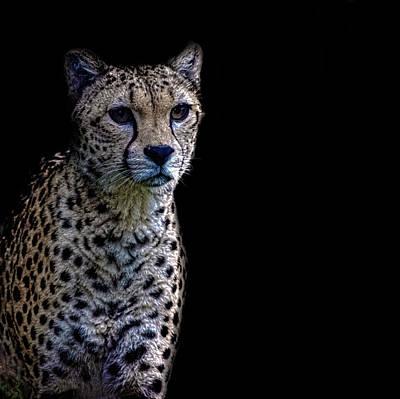 Cheetah Portrait Poster