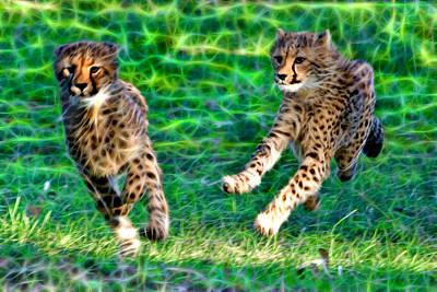 Cheetah Siblings Play And Chase Poster