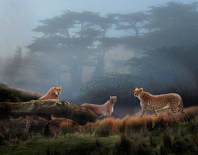 Cheetahs In The Mist Poster