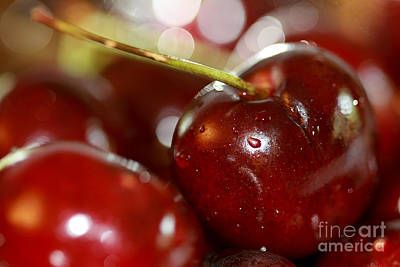 Cherries  Poster by A New Focus Photography