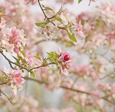 Cherry Blossom Delight Poster by Kim Hojnacki