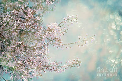 Poster featuring the photograph Cherry Blossom Dreams by Linda Lees