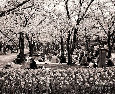 Cherry Blossom Festival Poster by Ari Salmela