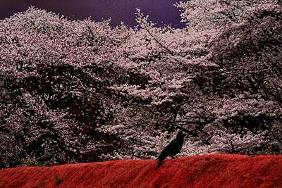 Cherry Blossom  Poster by Hsin Tseng